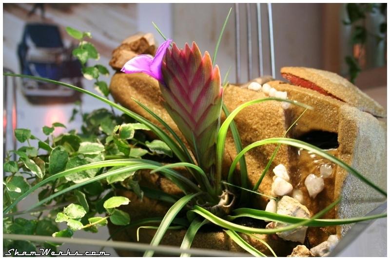 Et comme j ignorais totalement que ces plantes pouvaient fleurir comme    Nano Paludarium